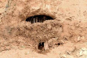 山西:发现迄今为止中国最早木炭窑