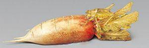 清代 · 象牙萝卜(陕西历史博物馆)
