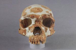 旧石器时代 · 金牛山文化