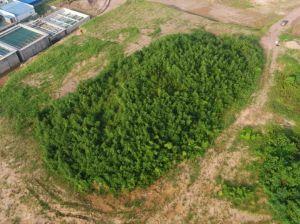 浙江:安吉上马山179号土墩考古发掘