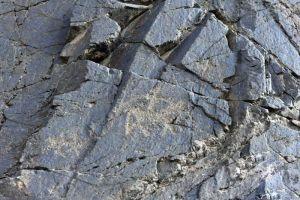 甘肃:肃北发现逾5000幅千年岩画 反映射猎游牧生活